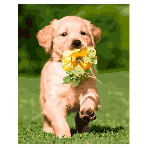ВанГогВоМне Картина по номерам Милый щенок, 40х50 см (ZX 21220)Картины по номерам и контурам<br>
