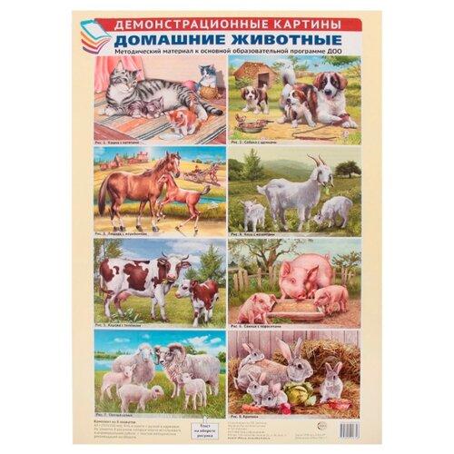 Купить Плакат Творческий Центр СФЕРА Домашние животные (8 шт), Обучающие плакаты