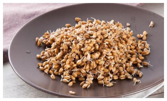 ВкусВилл Проростки пшеницы, контейнер пластиковый (Россия)