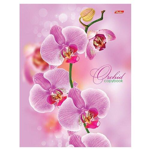 Купить Hatber Тетрадь 120ТК5В1_04374 клетка 120 л. розовая орхидея, Тетради
