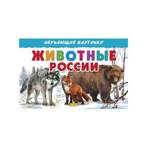 Купить Животные России. Обучающие карточки, Литур, Учебные пособия