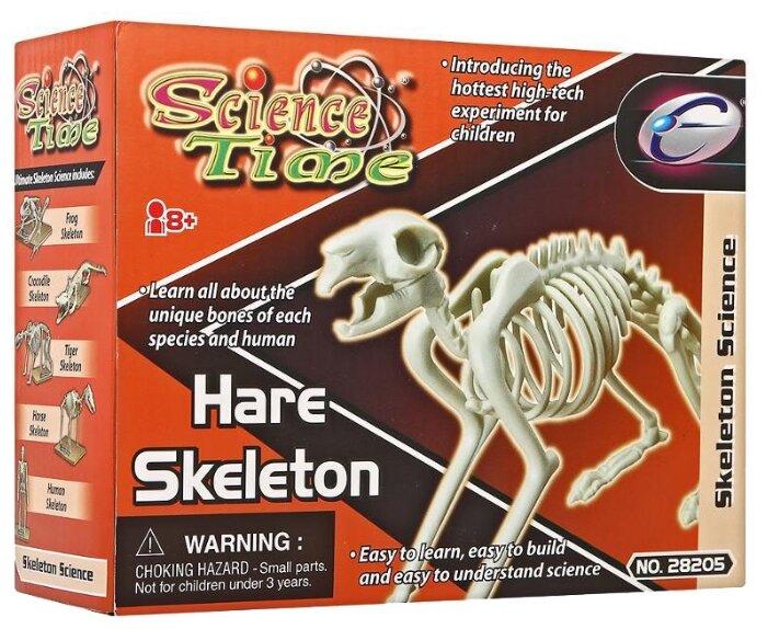 Набор Eastcolight Science Time Скелет зайца