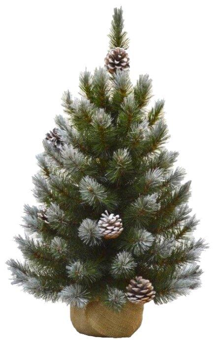 Triumph Tree Сосна Женева