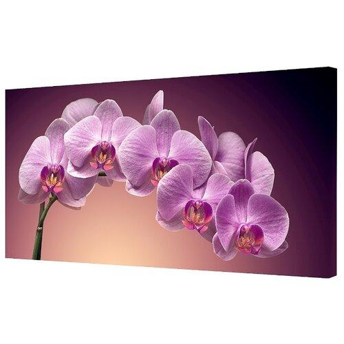 Картина Toplight TL-H0003 100х50 см