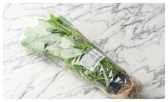 ВкусВилл Мелисса в горшочке, пакет полиэтиленовый (Россия)