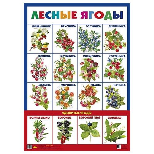 Купить Лесные ягоды. Плакат, Литур, Учебные пособия