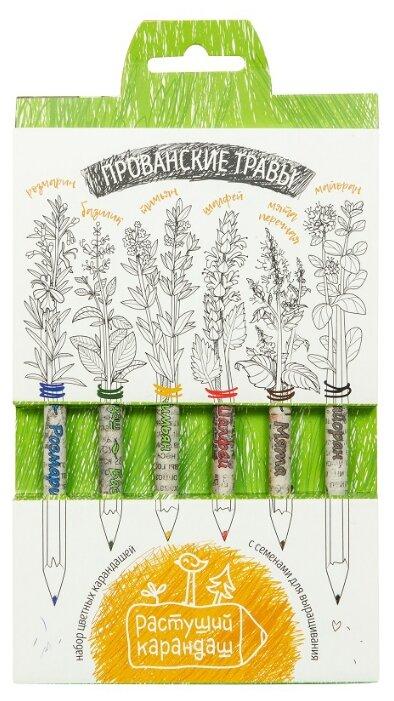 Растение Растущий карандаш Прованские травы цветные 6шт RK-02-06-08