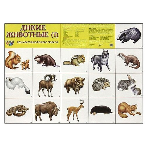 Купить Плакат Творческий Центр СФЕРА Дикие животные (1), Обучающие плакаты