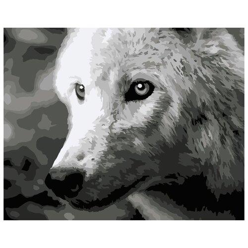 Купить F011 Набор для рисования по номерам 'Белый волк' 40*50см, Русская Живопись, Картины по номерам и контурам