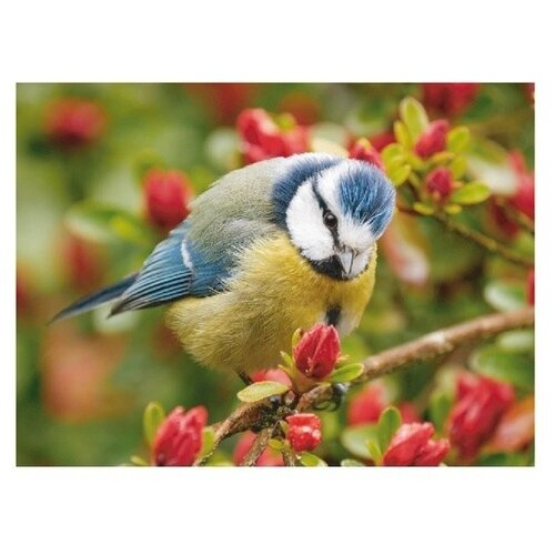 Купить Molly Картина по номерам Синичка 15х20 см (KH0241), Картины по номерам и контурам