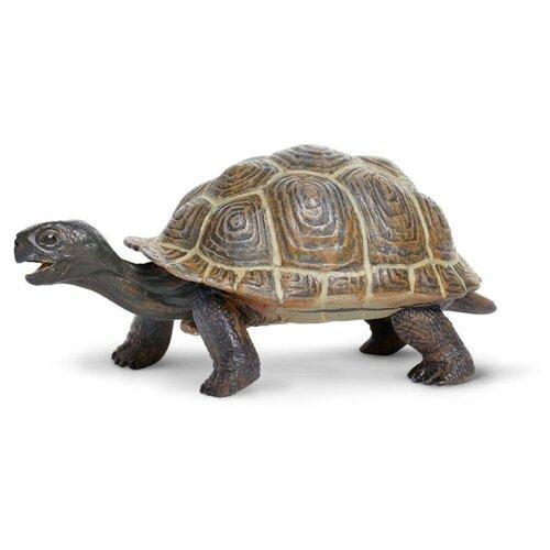 Фигурка Safari Ltd Сухопутная черепаха 260829 фигурка safari ltd панда 228729
