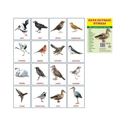 Демонстрационные картинки Супер. Перелетные птицы.16 раздаточных карточек с текстом перелетные птицы 16 раздаточных карточек