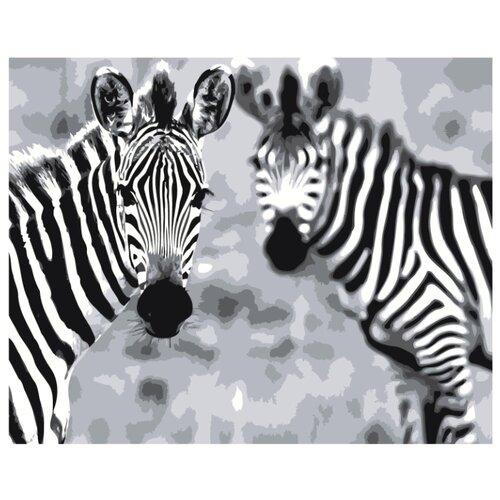 Купить Две зебры Раскраска картина по номерам на холсте Z-AB438 40х50, Живопись по номерам, Картины по номерам и контурам