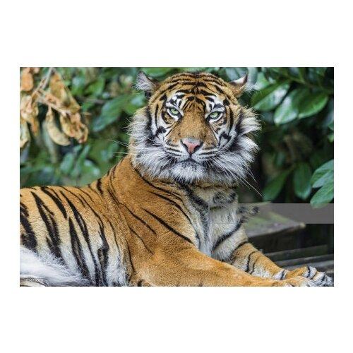 Холст с красками Рисование по номерам. Тигр в джунглях, 22х30 см.