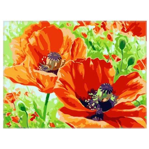 Купить Paintboy Картина по номерам Маки на лугу 40х50 см (GX7277), Картины по номерам и контурам