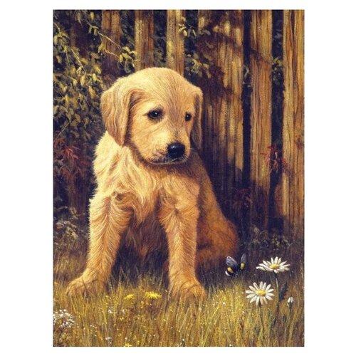 Купить Royal & Langnickel Картина по номерам Грустный щенок 22х29 см (PJS 60), Картины по номерам и контурам