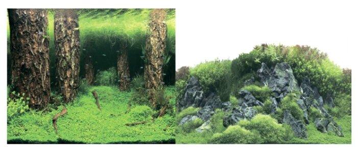 Пленочный фон Prime Затопленный лес/Камни с растениями