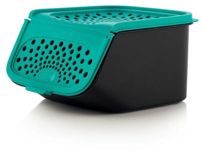 Купить Tupperware Контейнер Свежесть черный/зеленый по низкой цене с доставкой из Яндекс.Маркета (бывший Беру)