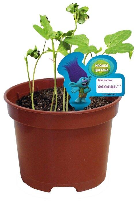 Набор для выращивания Вырасти меня Сад Троллей