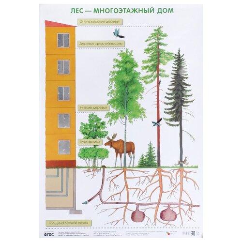 Купить Плакат Мозаика-Синтез Лес - многоэтажный дом, Обучающие плакаты