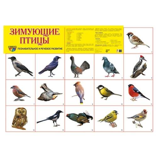 Плакат Творческий Центр СФЕРА Зимующие птицы