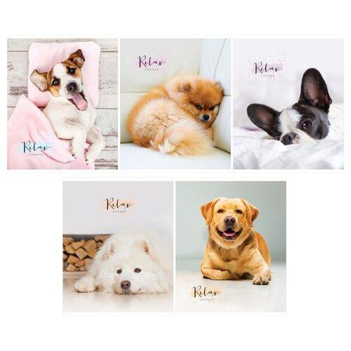 Купить ArtSpace Упаковка тетрадей Питомцы. The pets Т96к_26723, 5 шт./5 дизайнов, клетка, 96 л., Тетради
