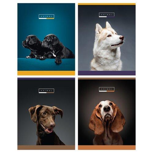 Купить Greenwich Line Упаковка тетрадей Animal N5c48-12879, 5 шт./4 дизайна, клетка, 48 л., Тетради
