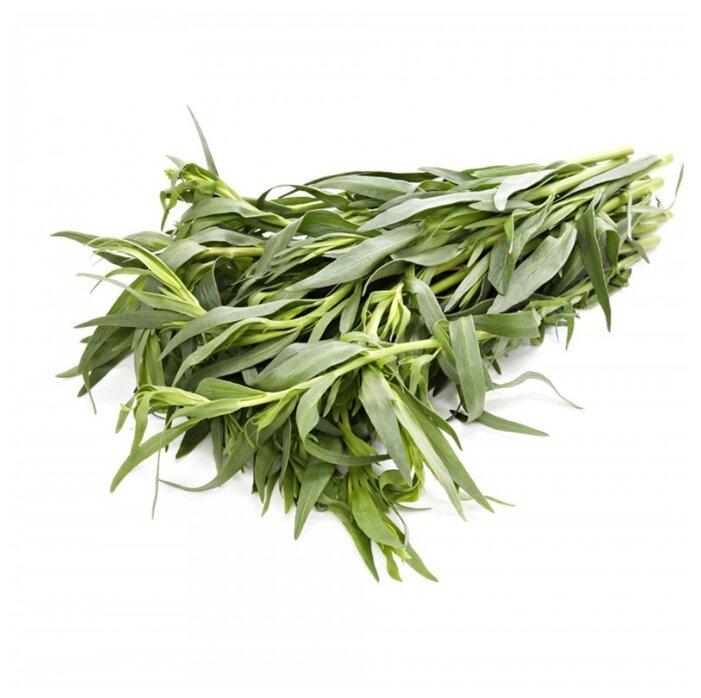 тархун растение картинка объявления оренбургской