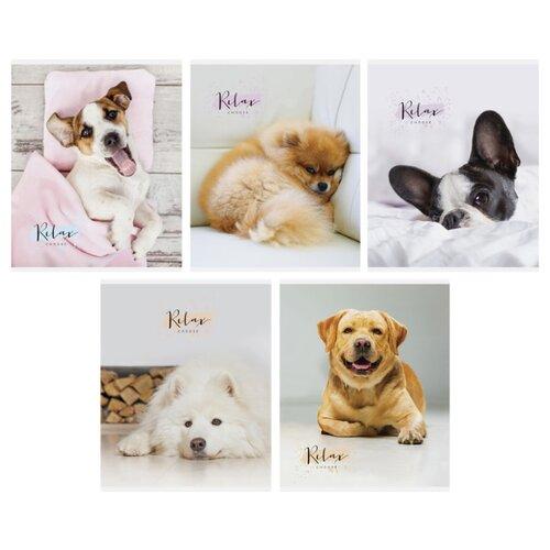 Купить ArtSpace Упаковка тетрадей Питомцы. The pets Т48к_24452, 10 шт./5 дизайнов, клетка, 48 л., Тетради