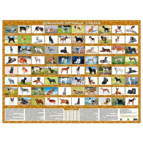 Плакат РУЗ Ко Породы собак. Тематическое настольное изданиеОбучающие плакаты<br>
