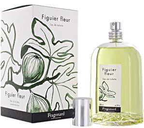 Fragonard Figuier fleur