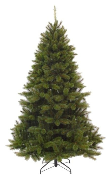 Triumph Tree Пихта Прелестная