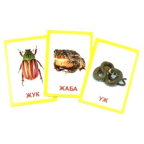 Набор карточек Вундеркинд с пелёнок Логопедка Ж 10x7 см 30 шт. вундеркинд с пелёнок подарочный набор вундеркинд с пелёнок мегачемодан