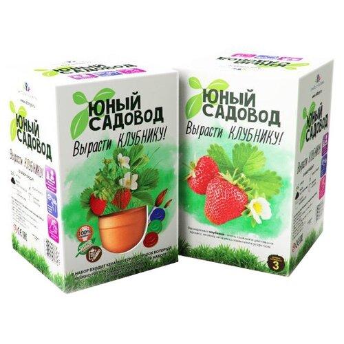 Набор для выращивания Инновации для детей Юный садовод. Вырасти клубнику