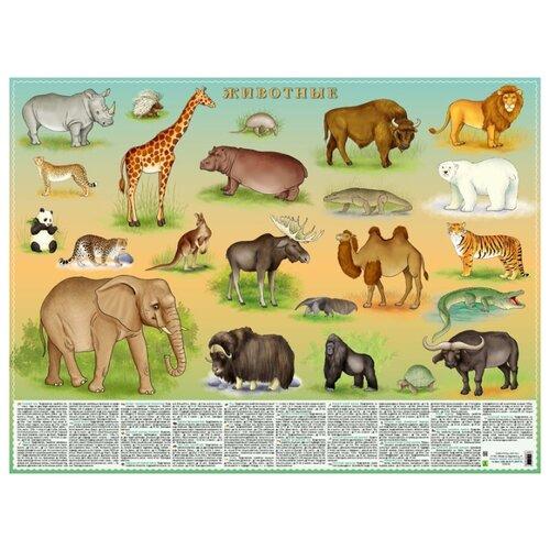 Купить Плакат РУЗ Ко Животные. Настольное издание, Обучающие плакаты