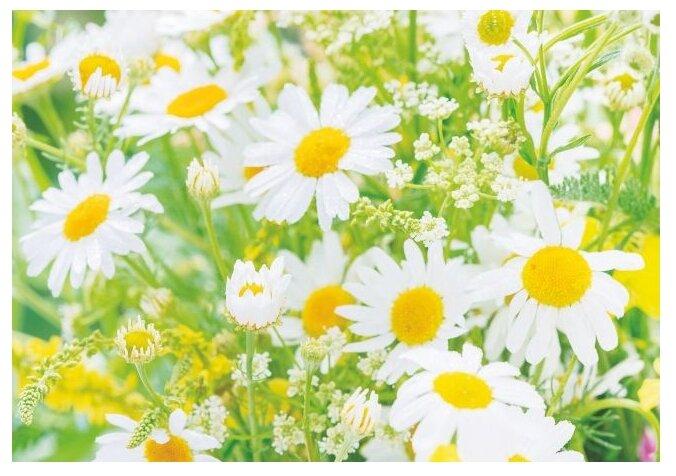 Фотообои бумажные Симфония Солнечные ромашки В-017 Bellissimo 2х1.4м