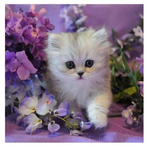 Купить Molly Картина по номерам Котенок в сиреневых цветах 30х30 см (KH0387), Картины по номерам и контурам