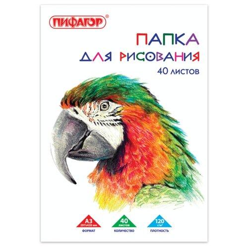 Купить Папка для рисования Пифагор Попугай 42 х 29.7 см (A3), 120 г/м², 40 л., Альбомы для рисования