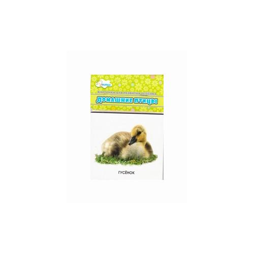 Купить Домашние птицы: мамы и дети. Учебные карточки, Улыбка, Учебные пособия