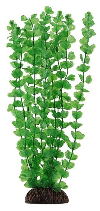 """Растение аквариумное """"Бакопа"""" (зеленое), 100 мм"""