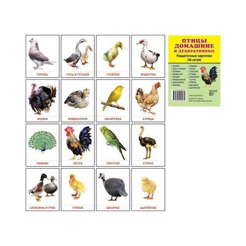 Демонстрационные картинки Супер. Птицы домашние и декоративные. 16 раздаточных карточек с текстом перелетные птицы 16 раздаточных карточек