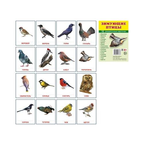 Демонстрационные картинки Супер. Зимующие птицы.16 раздаточных карточек с текстом перелетные птицы 16 раздаточных карточек