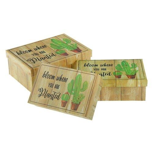 Фото - Набор подарочных коробок Shantou Chengxing Craft Product Кактусы, 3 шт коричневый набор подарочных коробок tai an baoli paper product co ltd фауна 17 шт желтый