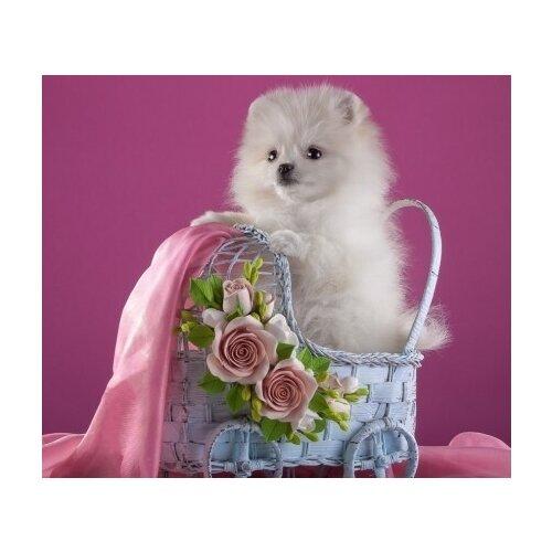 Купить Рыжий кот Картина по номерам Милый щеночек в коляске 30*40см (Х-7621), Картины по номерам и контурам