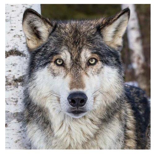Molly Картина по номерам Серый волк 30х30 см (KH0375) molly картина по номерам тигр 40 50 см