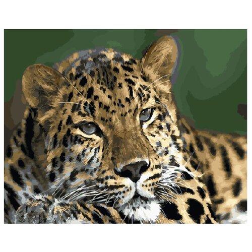 Купить Картина по номерам ВанГогВоМне ZX 20594 Взгляд хищника 40х50 см, Картины по номерам и контурам