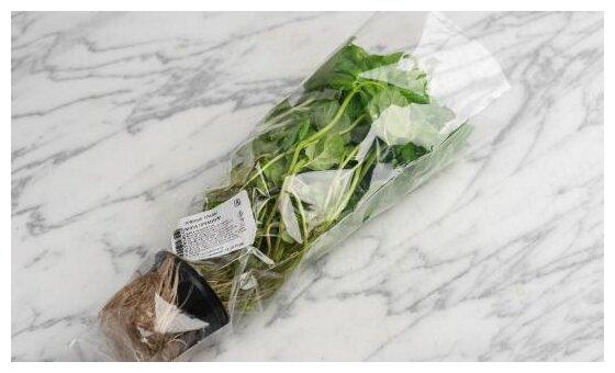 ВкусВилл Мята в горшочке, пакет полиэтиленовый (Россия)