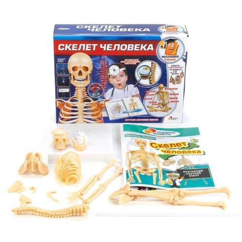 Купить Набор Играем вместе Скелет человека, Наборы для исследований