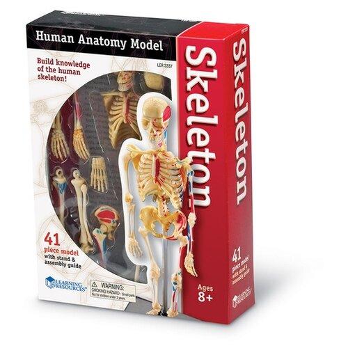 Набор Learning Resources Skeleton LER3337