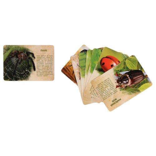 Купить Набор животных с обучающими карточками В мире насекомых , 12 животных 2519486, IQ-ZABIAKA, Игровые наборы и фигурки